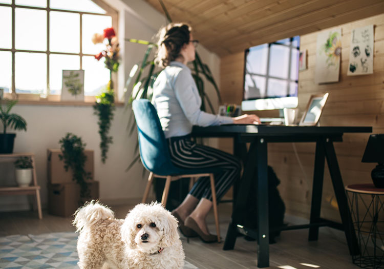 Businesswoman Working In Office While Little Dog Playing With Ball Around
